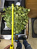 Веник береза, фото 3