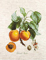 Набір для вишивки хрестом Luca-S BA22450 «Персики»
