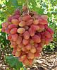 Саженцы винограда сорт Преображение