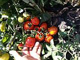 Семена томата Асвон 5000 семян, фото 2