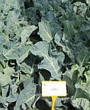 Семена цветной капусты Балбоа F1 / Balboa F1 - 2500 семян, фото 2