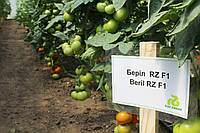Семена томата Берил (Beril RZ) F1, 1000 семян, фото 1