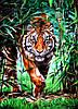 Картина за номерами Тигр у бамбуковому гаю, кольоровий полотно на картоні, 40*50 см, без коробки Barvi