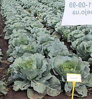 Семена капусты Джубили F1 / Jubilee F1, 2500 семян