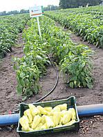 Семена перца Диментио F1, 500 семян, фото 1