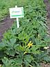 Семена кабачка Каризма F1, 2500 семян
