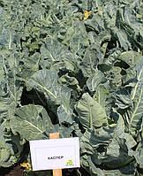 Семена капусты Каспер (Kasper RZ) F1 1000 семян, для летних посадок, фото 1