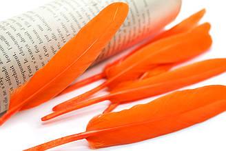 Перья для декора, 30шт. Длина 10-15 см. Цвет Оранжевый