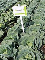 Семена капусты Килагерб F1, 2500 семян