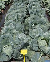 Семена капусты Колия-Kolia F1 - 2500 семян, фото 1