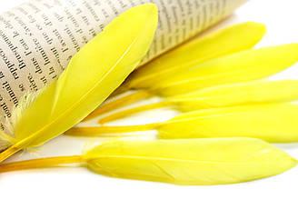 Перья для декора, 30шт. Длина 10-15 см. Цвет Желтый