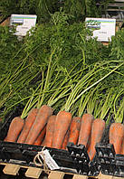 Семена Морковь Кордоба F1 / Cordoba F1 NEW!, (2, 2-2, 4 мм), 1 млн. семян, фото 1