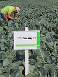 Семена капусты Лекану F1, 2500 семян, фото 3