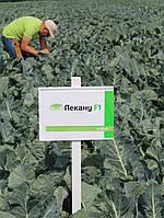 Семена капусты Лекану F1, 2500 семян