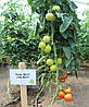 Семена томата Лилос 73-490 (Lilos RZ) F1, 1000 семян