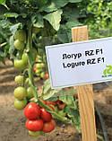 Семена томата Логур (Logure RZ) F1, 1000 семян, фото 3