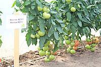 Семена томата Махитос 73-407 (Mahitos RZ) F1, 1000 семян, фото 1