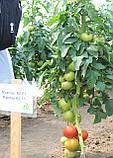 Семена томата Махитос 73-407 (Mahitos RZ) F1, 1000 семян, фото 4