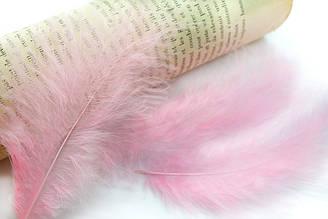 Декоративные перья для рукоделия, 10шт. Длина 12-15 см. Цвет Розовый