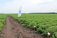 Семена Морковь Нерак F1 / Nerac F1, (1, 6-1, 8 мм), 1 млн. семян, фото 1
