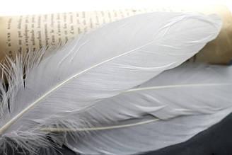 Декоративные перья для рукоделия, 30шт. Длина 17-21 см. Цвет Белый