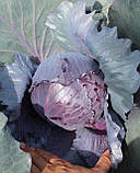 Семена капусты синей Ранчеро F1 / Ranchero F1, 2500 семян, фото 3