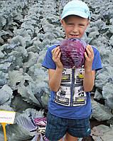 Семена капусты синей Ранчеро F1 / Ranchero F1, 2500 семян, фото 1