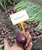 Семена Лук Ред РумF1 / Red Rum F1, 250 тыс. семян, фото 1