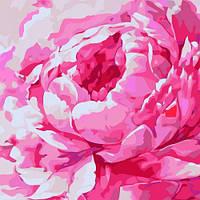 """Картина по номерам """"Розовый пион 2"""" , Идейка, картины по номерам,рисование по номерам,живопись по"""