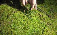 Что делать если в теплице зеленеет грунт