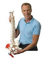 Качество ортопедических матрасов Shlaraffia Active Life подтверждено дипломом университета Европы (Германия)