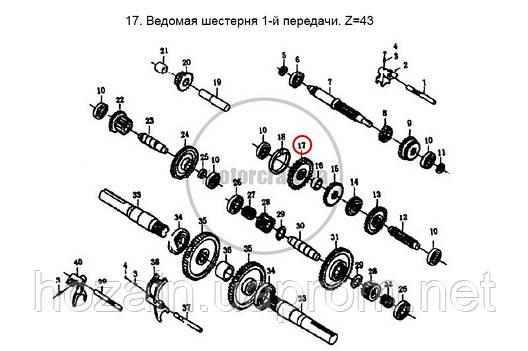 Шестерня ведомая 1 передачи Z=43 (шт.), фото 2
