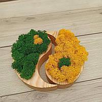 Кашпо ′Інь і янь′ з мохом, фото 1