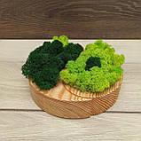 """Дерев'яне кашпо ′Інь і янь"""" з мохом, фото 2"""