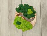 """Дерев'яне кашпо ′Інь і янь"""" з мохом, фото 4"""