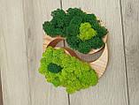 """Дерев'яне кашпо ′Інь і янь"""" з мохом, фото 5"""