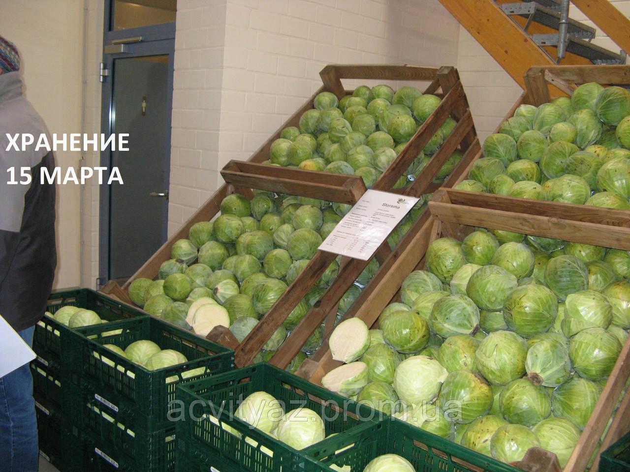 Семена капусты Сторема (Storema RZ) F1 130-140 дн., 2500 семян