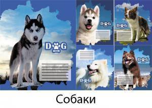 "Тетрадь линия, 24 листа, Leader ""Собаки"""