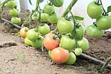 Семена томата Эсмира (Esmira RZ) F1 розовый, 1000 семян, фото 4