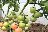 Семена томата Эсмира (Esmira RZ) F1 розовый, 1000 семян, фото 5