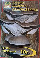 Мицелий гриба Вешенка обыкновенная