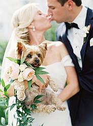 Собака на Свадьбе: Плюсы и Минусы Вовлечения Вашего Питомца в Свадебную Церемонию