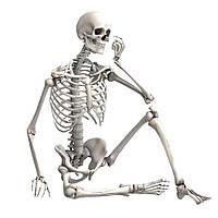 Большая модель скелета детализированная фигурка скелета анатомический скелет человека 90см