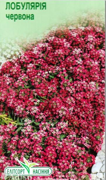 """Семена цветов Лобулярия красная, 0,2 г, """"Елітсортнасіння"""",  Украина"""