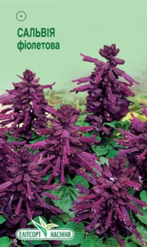 "Семена цветов Шалфей (Сальвия) ""Блестящий"", фиолетовый, многолетнее, 0.1 г, ""Елітсортнасіння"", Укра"