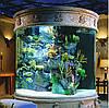 Первый запуск аквариума (инструкция)