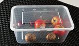 Контейнер для їжі з кришкою 1500 мл, фото 3