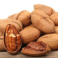 Саженцы ореха пекана GraZona - средне-ранний, зимостойкий, крупноплодный