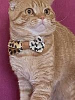 Аксессуары бабочки для котов и собак