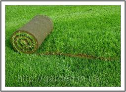 Рулонный газон от производителя.